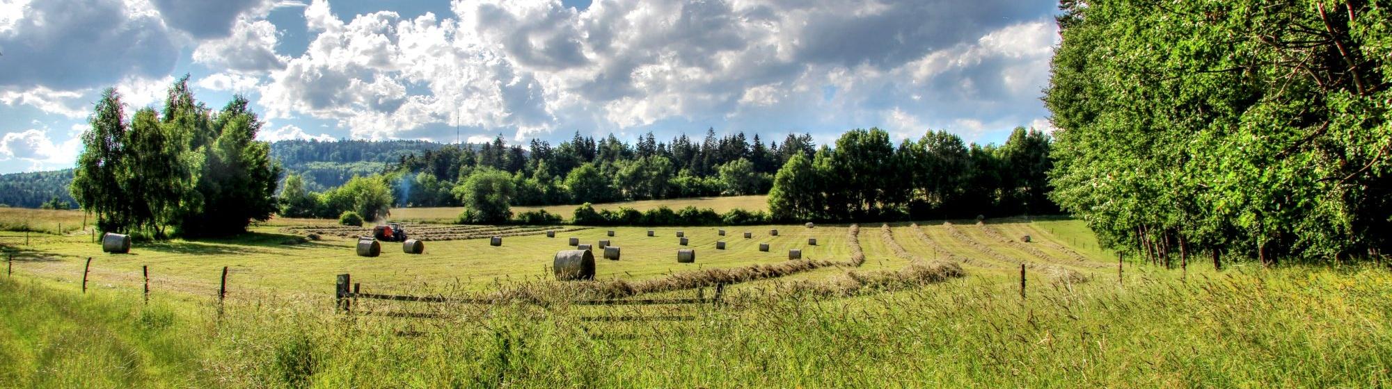 Pohled na vrch Javořice z naučné stezky