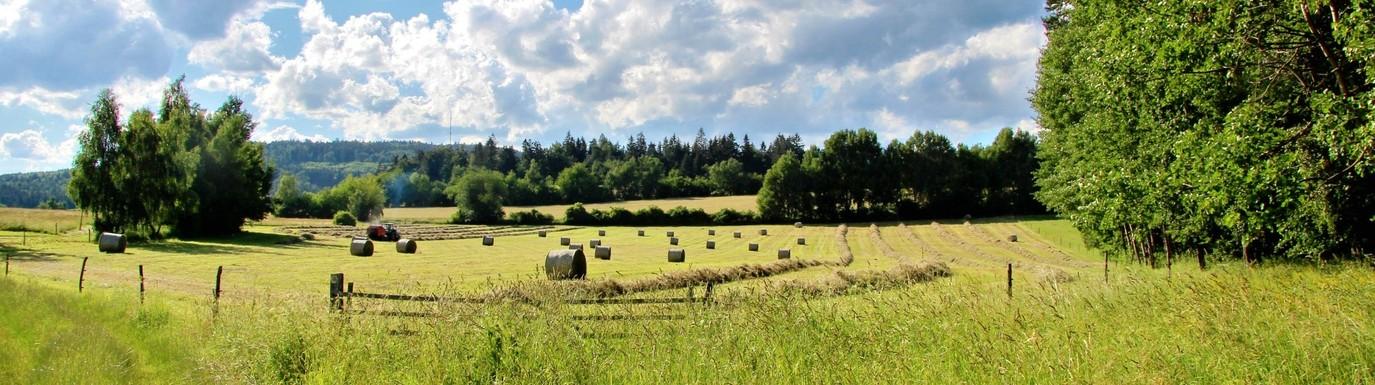 Pohled na vrch Javořice a okolní krajinu