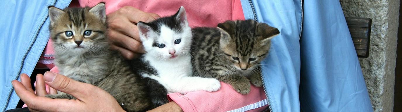 Tři koťata v náručí
